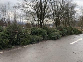 Christbaumsammlung 2020 Bäume -332-